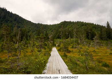 Walking Path / Boardwalk through the beautiful forest landscape near Icy Strait Point, Hoonah Alaska