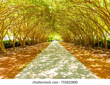 Walking path in a Dallas city park with a canopy of crepe myrtle tree branches providing a canopy from the afternoon sun