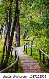 Walking path in forest, Schopfloch, Germany