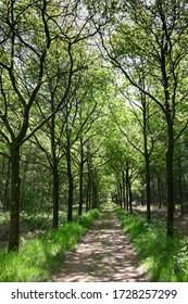 Spazierweg in einem frischen grünen Wald im Frühling. Wanderweg in Wäldern. Vertikales Bild