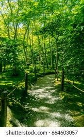 Walking path in Giou-ji Temple / Kyoto / Japan