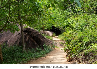 Walking path in green jungle forest. Summer forest hiking. Blooming greenery of tropical jungle. Green forest and treking path. Summer travel landscape. Ecosystem of jungle forest. Green bush in park