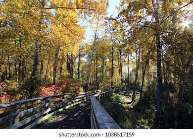 A walking path leading in to an autumn colored forest.
