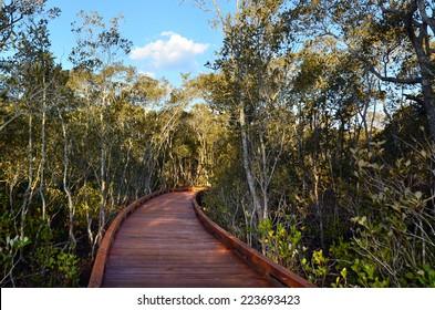 A walking path over mangrove swamp habitat in Coombabah wetlands in Gold Coast Queensland, Australia.