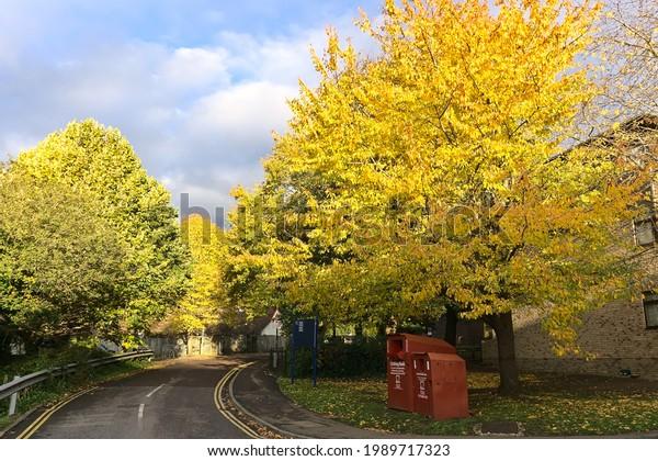 walking-path-park-during-autumn-600w-198