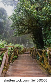 Walking Path in Rain Forest at Doi Inthanon nationalpark, Chiang Mai, Thailand