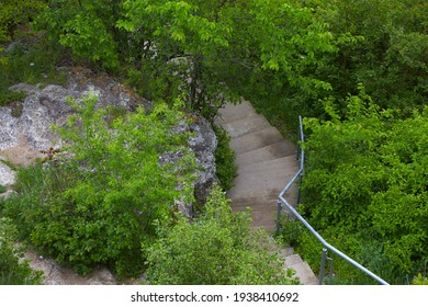 A walking path with stairs climbs through the lush greenery of a forest.