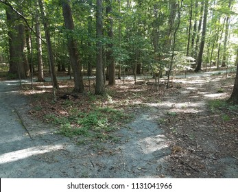 walking path in the woods with shortcut