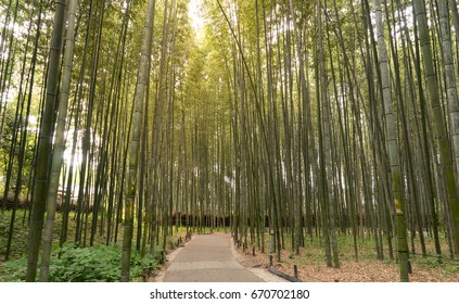 The walking paths at Bamboo groove Arashiyama district rural area  in Kyoto , Japan