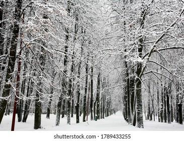 Walking pathway in the city winter park in december