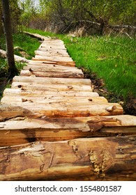 walking the planks in the forest