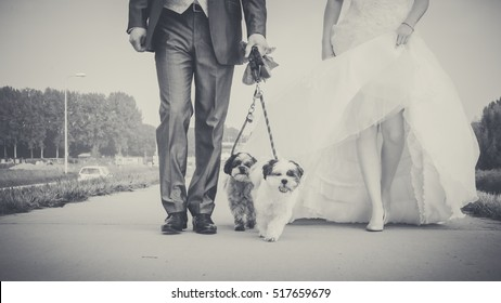 Walking with small dog of the bride on the morning of the wedding day