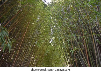 Walking through a canopy of bamboo