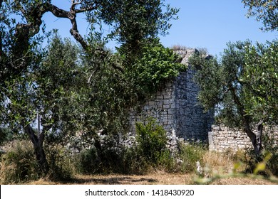 Walking through the countryside of Puglia, in southern Italy. An old stone ruin abandoned among the olive trees in an isolated area.