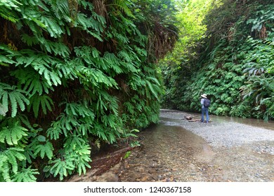 Walking through Fern Canyon, Prairie Creek Redwoods State Park, CA