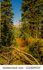 Walking through the forest around Leigh Lake in the Grand Teton National Park in Wyoming, I caught a tiny view of the water and mountain scape.