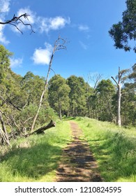 Walking track in Australian bushland with blue sky in background