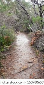 Walking Trail in the Australian Bush on the Beecroft Peninsula Australia
