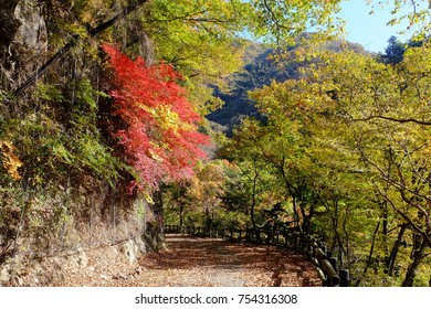 Walking trail in autumn, Okutama, Tokyo, Japan (Images for walking, hiking, trekking, forest bathing, forest therapy, etc.)