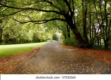 a walking trail in a beautiful tree-covered park