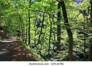 Walking trail in forest, Slovakia