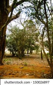A Walking Trail in the Nandi Hills, near Bangalore, India