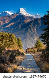 Walking trail to Poon hill view point at Nepal. Poon hill is the famous view point in Gorepani village to see beautiful sunrise over Annapurna mountain range in Nepal
