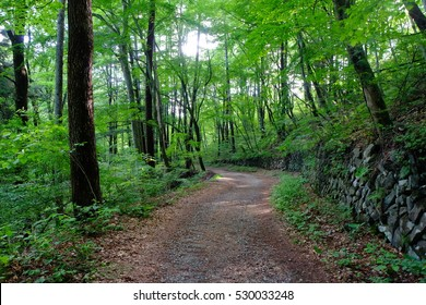 Walking trail surrounded by fresh green, Karuizawa, Nagano, Japan