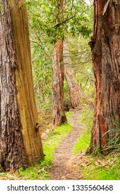 Walking trail through the forest in The Grampians National Park, Victoria, Australia