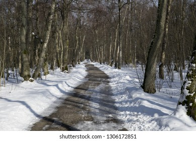 Walking trail through the forest park in Nida, Curonian Spit National Park (Lithuania), March 2018