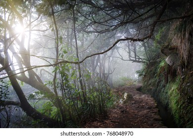 Walking trail in tropical forest,Caldeirao Verde levada,Madeira Island,Portugal