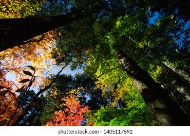 walking under autumn leaves at Karuizawa Japan