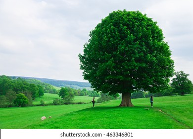 Walking under a lonely tree