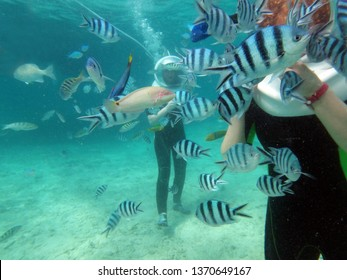 Walking underwater on seabed among school of fish