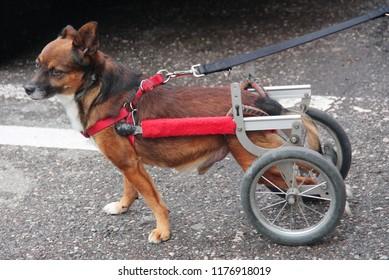 Walking wheels rear dog wheelchair