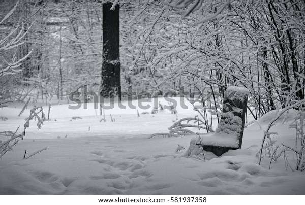 Walking in the winter forest, has led to a lonely kreslou of hemp under the snow-covered trees.