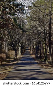 Walkingtrail with an avenue in winter