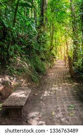 Walkpath in Arenal Hanging Bridges Park in Costa Rica
