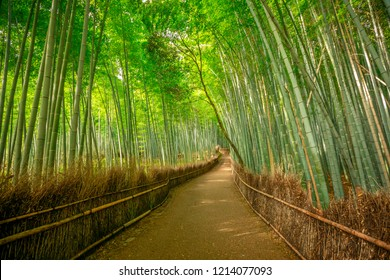 Walkway in bamboo forest at Sagano in Arashiyama. The grove is Kyoto's second most popular tourist destination and landmark. Natural green background.