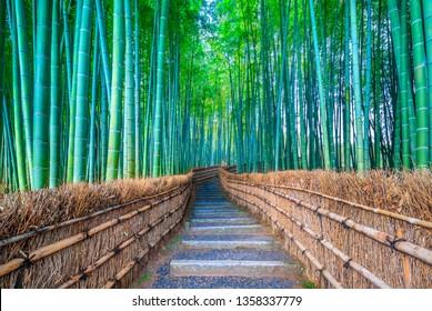 Walkway bamboo tunnel named Arashiyama bamboo forest in Kyoto, Tourist landmark of Japan