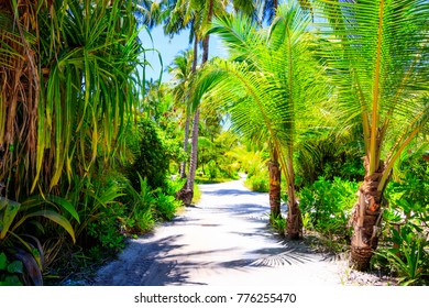 Walkway between palm trees on a Maldives island