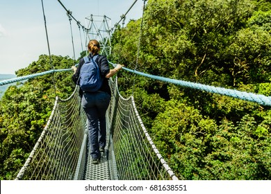 Walkway canopy tour, bridge in the rain forest, Rwanda, Nyungwe National park