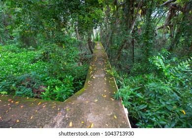Walkway cement in the evergreen forest in national park