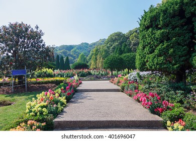 Walkway in flower garden