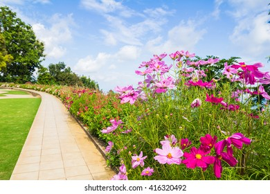 Walkway in flower garden and Bright sky