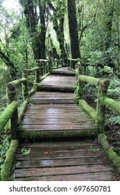 the walkway in forest