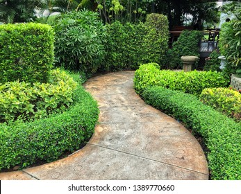 Walkway in the garden. Green shrub beside pathway.