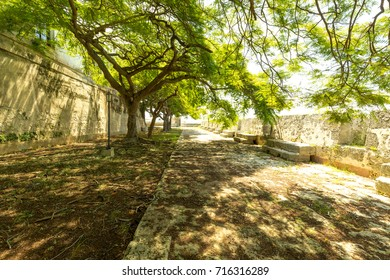 A walkway in Havana, Cuba. Tropical trees and aged stone walls.