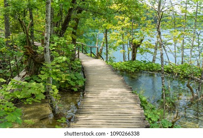 Walkway into the woods at Plitvice Lakes National Park in Croatia