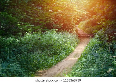 Walkway lane path with green deciduous trees in forest. Beautiful alley, road In park. Way through summer forest with sunflare.